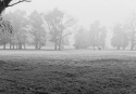 10-A-M3-Fernandez Ines-Neblina matinal