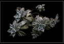 10-Cura Nora - Flores verdes