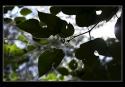11-P-C2-Rodriguez silvana-santacatalina