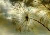Carolina Coronado-Reflejo botanico