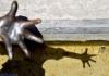 SPALLA, JONATAN - Retirar la mano cuando ya otra mano se extiende hacia ella; semejante a la cascada, que