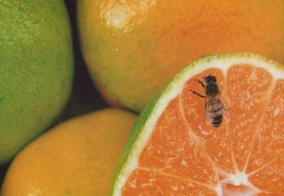"""foto: """"Exprimido de naranja"""" de Rita Porrozzi"""