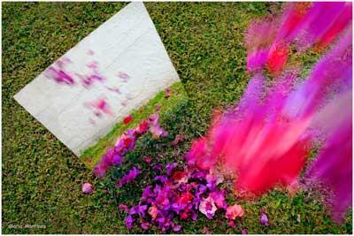 Flores-para-charla
