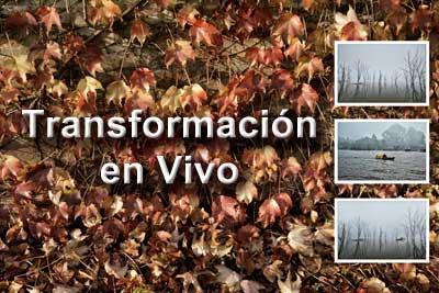 Transformacion-web